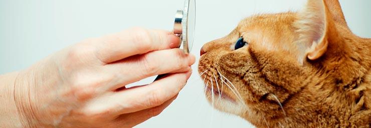 portare animale veterinario