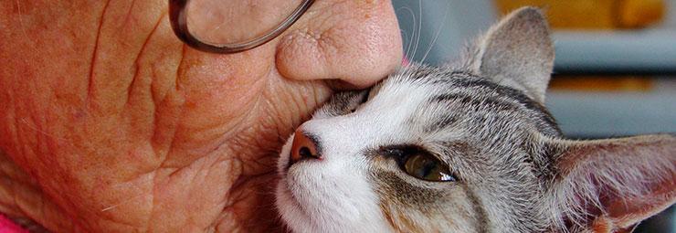 pet therapy anziani