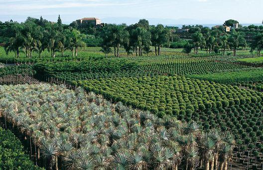 Vivaio Forestale Sicilia : L ente sviluppo agricolo siciliano al servizio di comuni per i
