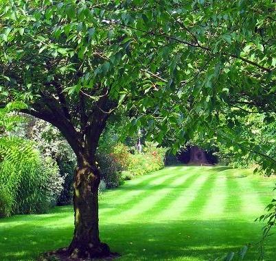 Dichio Mobili Da Giardino.Dichio Vivai Garden Vivai Piante E Fiori Bernalda Paginegialle It
