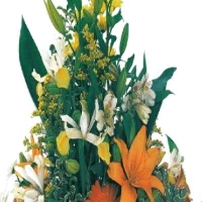 Iannoni Fiori General Flower Fiori E Piante Vendita Al