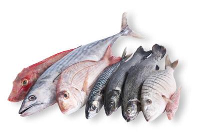 Pescheria Bottega Del Pesce Pescherie Grottammare Paginegialleit