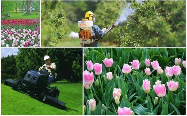 Pianeta Verde Giardinaggio Servizio San Giovanni In Persiceto