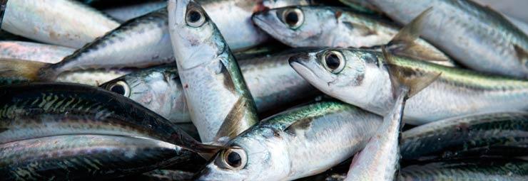 conoscere pesce fresco