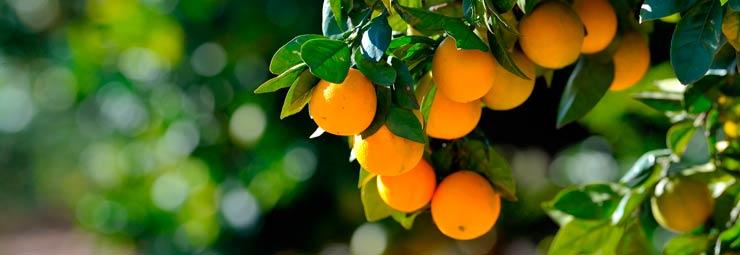 piantare alberi frutto