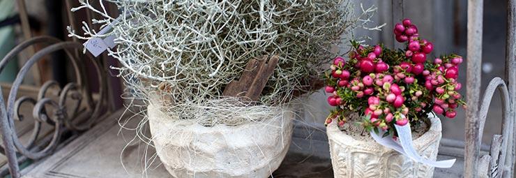 protezione piante inverno