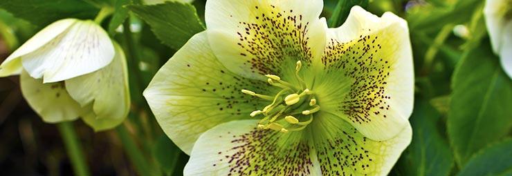 Le Piante Che Resistono Al Freddo Per Un Giardino Fiorito Anche In