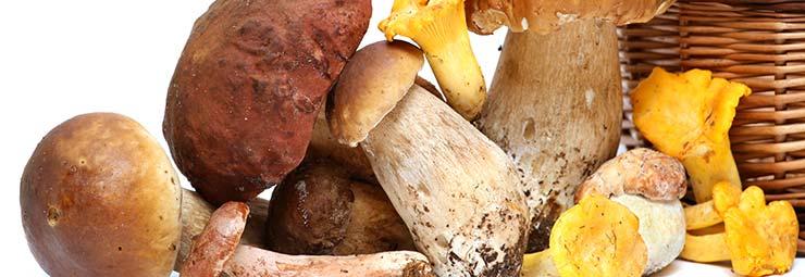 menù funghi e tartufi