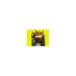 Ombre Fiorite