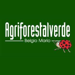 Agriforestalverde - Motoseghe Monghidoro