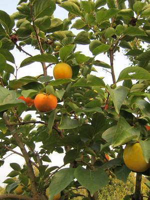 Alberi da frutto rugiano martinuzzo