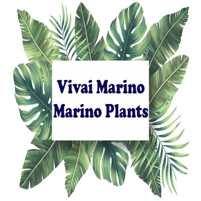 Vivai Marino - Marino Plants - Vivai piante e fiori Melito Di Napoli