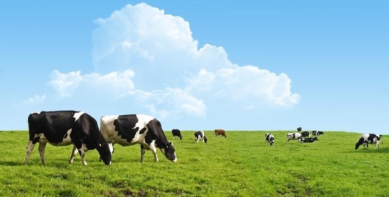 Prodotti per l'agricoltura AGRICOLA ARCISATE