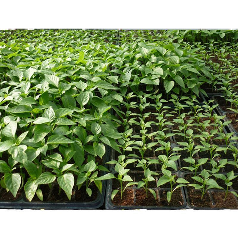 preventivo per primavera centro giardinaggio trapani