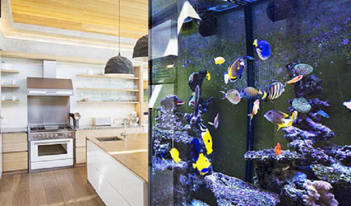 pesci tropicali SOTTOMARINO GIALLO
