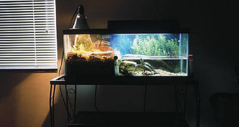 acquari tropicali SOTTOMARINO GIALLO