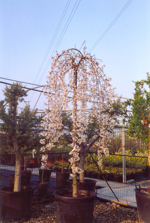 Floricultura Viaro