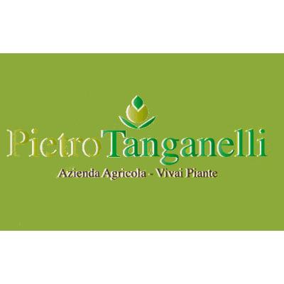 Vivai Tanganelli Pietro - Vivai piante e fiori Castiglion Fiorentino