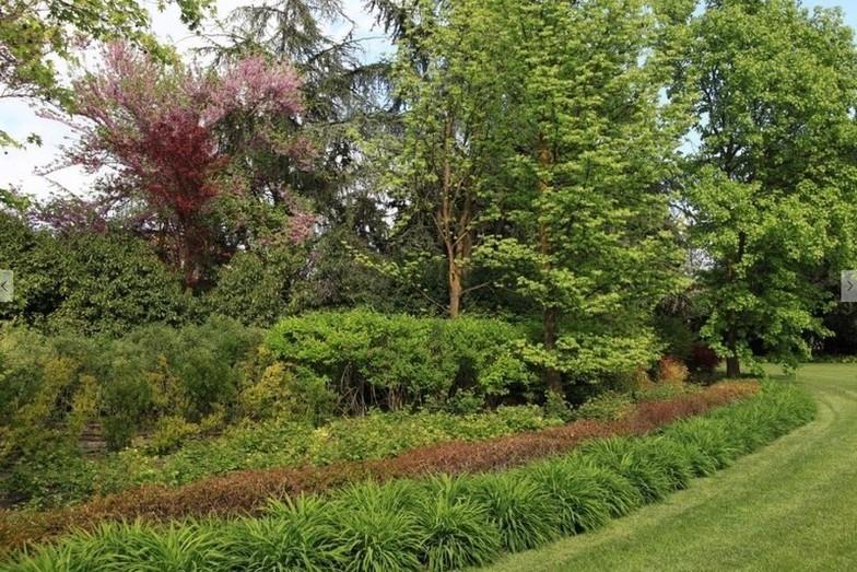 FORLIN VIVAI PIANTE -  piante