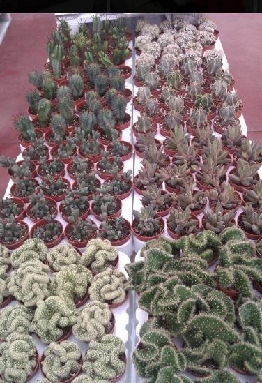 Esposizione piante grasse