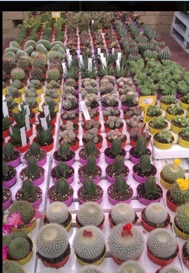 Esposizione piante da giardino