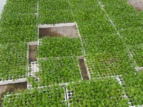 Vivai piante e fiori societa 39 agricola co vi ser srl for Piantine ortaggi