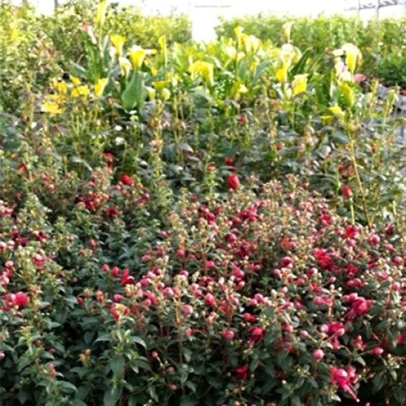 vivai piante e fiori vivai montanaro sas brindisi