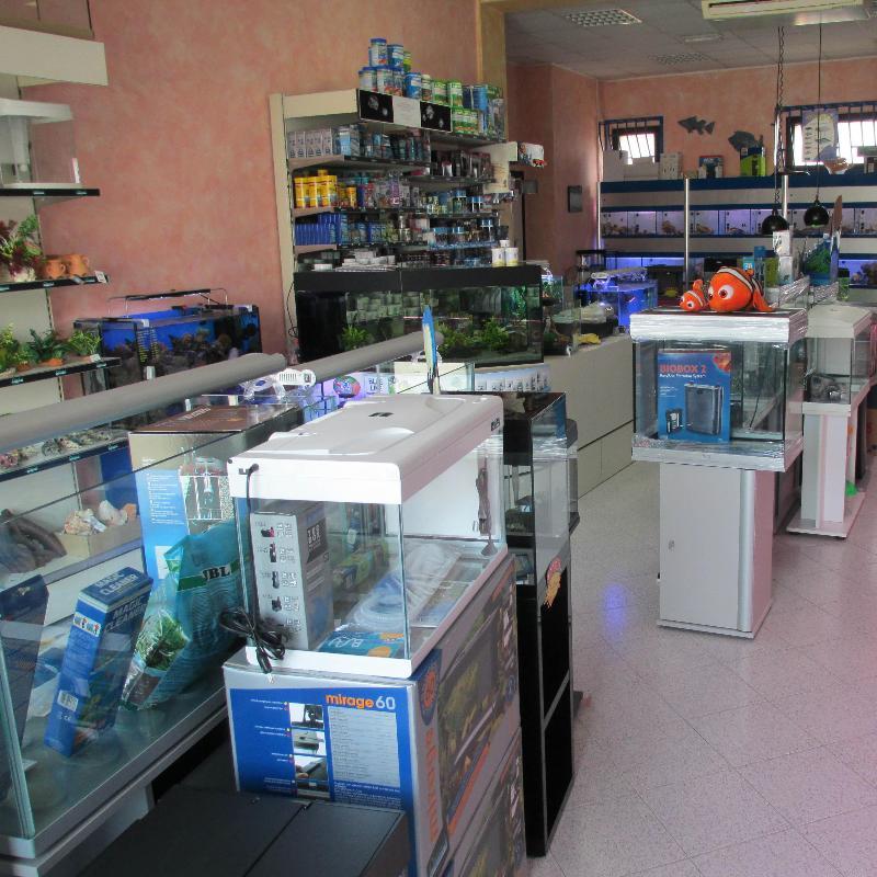 Preventivo per acquari e colori sas varese paginegialle casa for Tartarughe acquatiche vendita