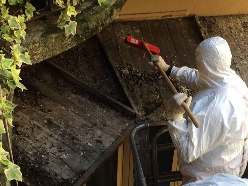 interventi di pulizia animali  BIOSAN - SERVIZI INTEGRATI PER L'AMBIENTE