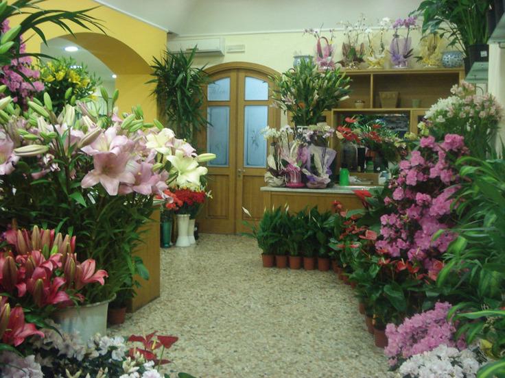 Fiori salemi gaetano catania piazza santa maria della - Porta piante da interno ...