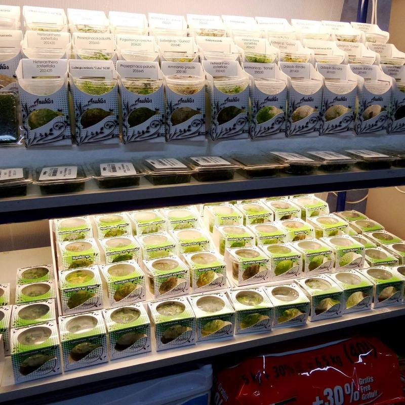 Aquaplantarum acquari e accessori grugliasco corso for Laghetti termoformati
