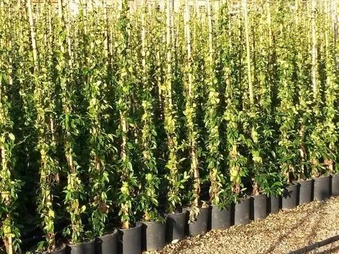 Vivai piante e fiori gambetta piante vivai savona for Vivai piante