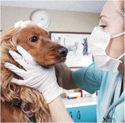 Clinica Veterinaria Bustese