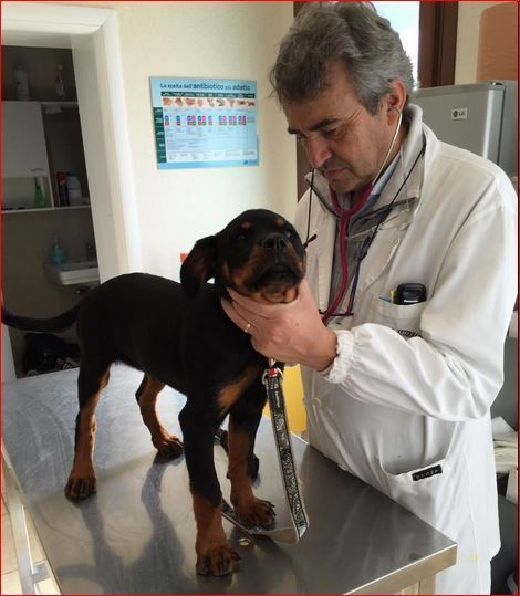 Ambulatorio Veterinario Lazzari