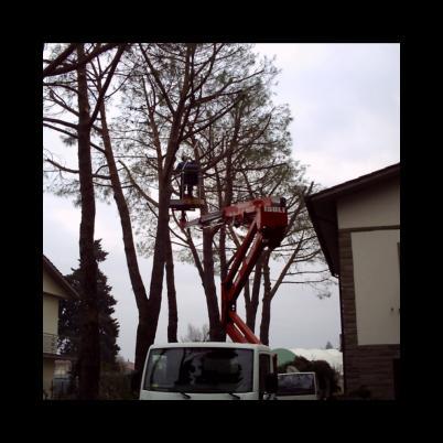 Abbattimento e potatura di alberi anche di alto fusto