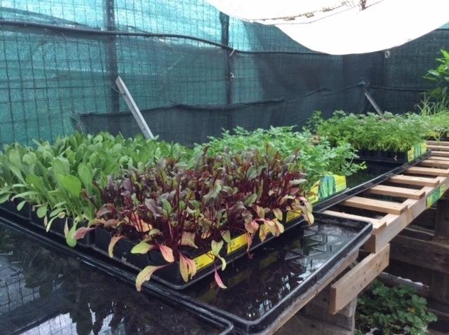 Preventivo per quattro esse attrezzatura agricola sud for Vendita piante da frutto sardegna