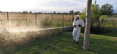 Disinfestazione insetti striscianti