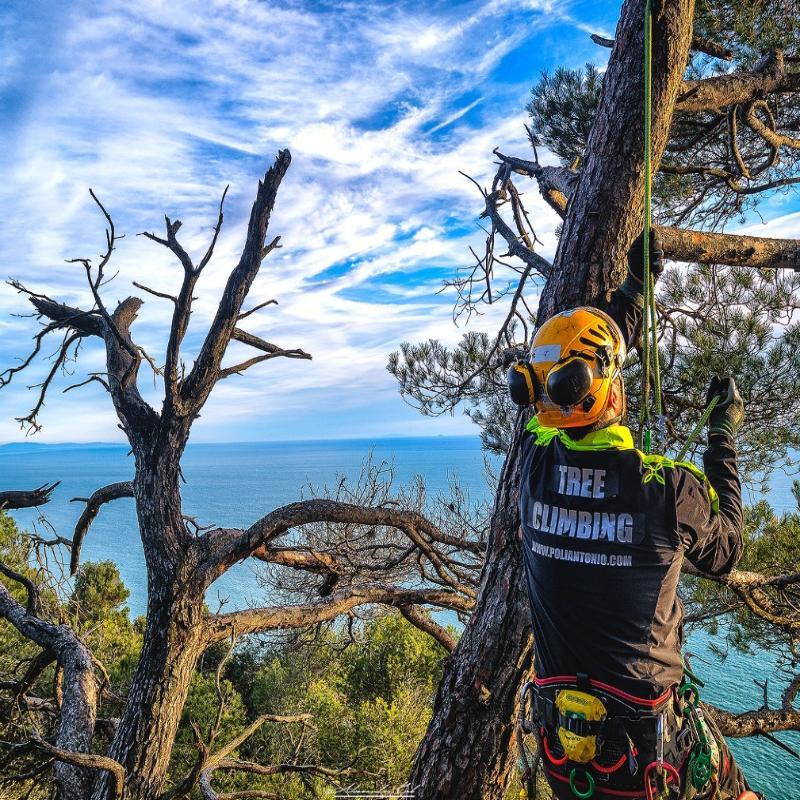 tree climbing Antonio Poli