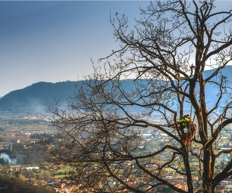 potature alberi ad alto fusto tree climbing Antonio Poli