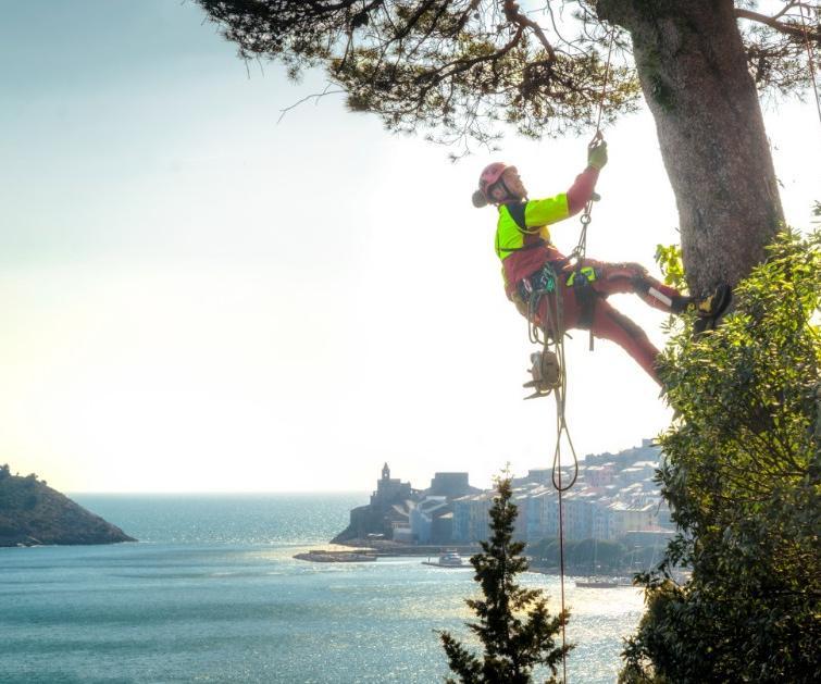 tree climbing Antonio Poli La spezia
