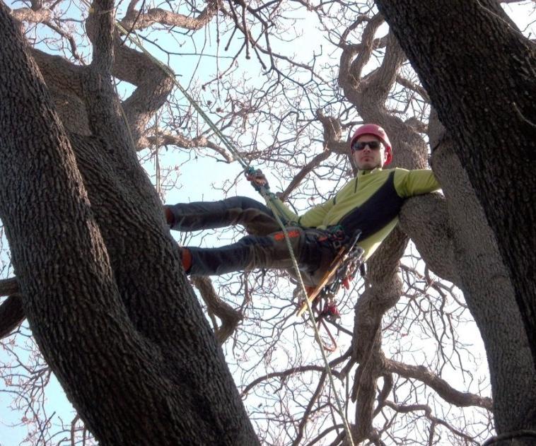 tree climbing potature piante alto fusto Antonio Poli La Spezia
