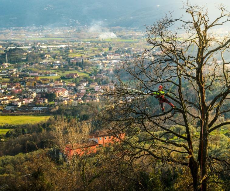giardiniere potature alberi tree climbing Antonio Poli La Spezia