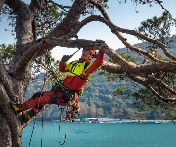 preventivi giardiniere tree climbing Antonio Poli La Spezia