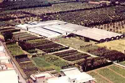 Vivai Rosso Antonio : Vivai piante e fiori in provincia di messina paginegialle.it