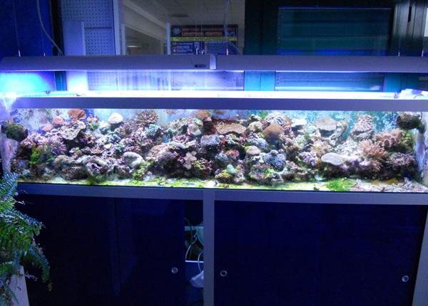 acquariologia Habitat Zoo