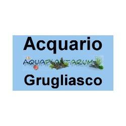 Aquaplantarum Acquari e Accessori