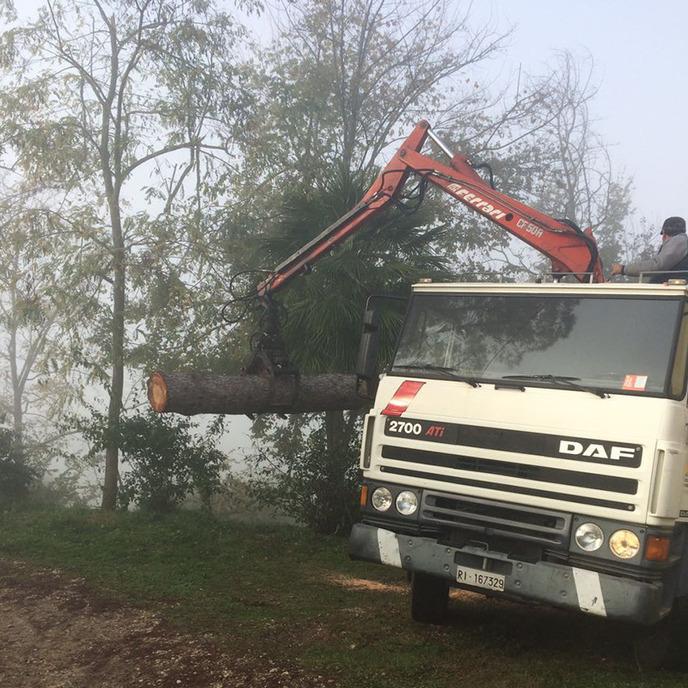 Tagli alberi alto fusto