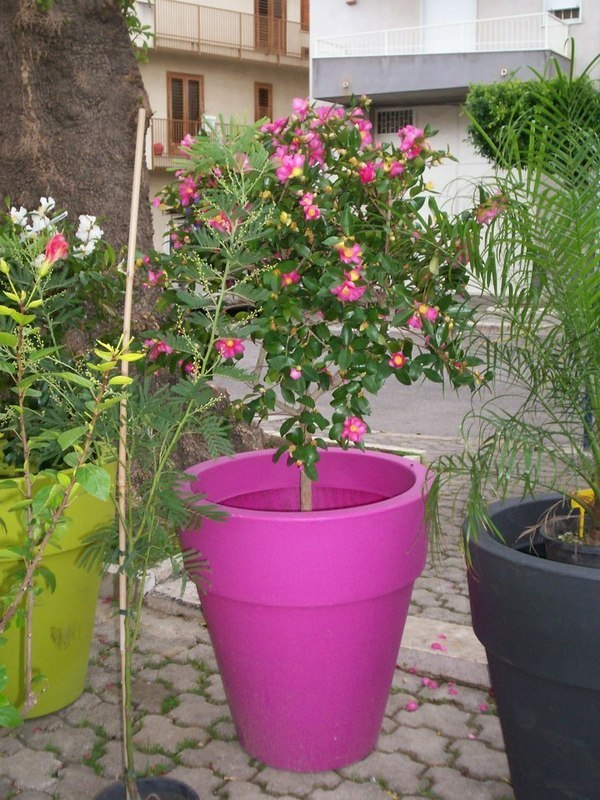 Vivaio Suriano piante