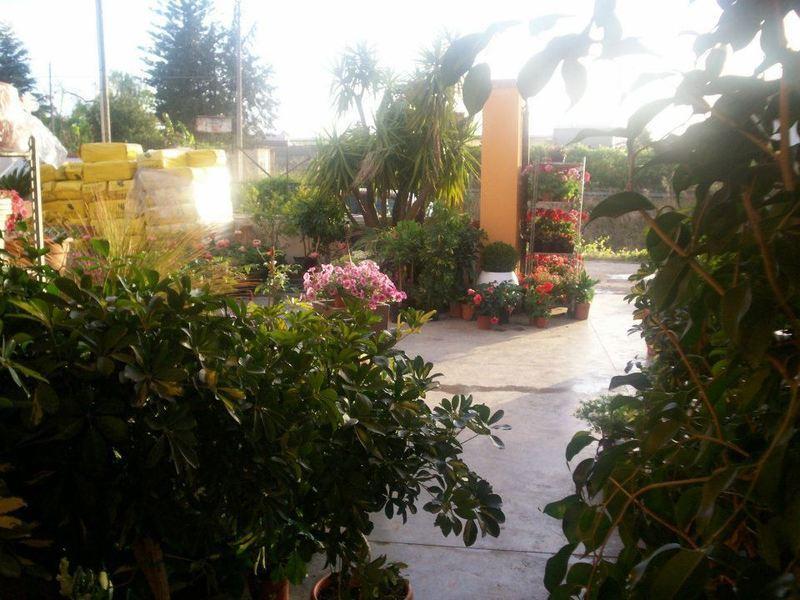 Vivaio Suriano fiori e piante