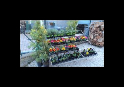 Vivai Rosso Antonio : Vivai piante e fiori a tivoli paginegialle